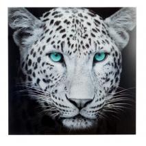 Un tigre et un léopard