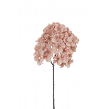 Fleur rose d'hydrangea