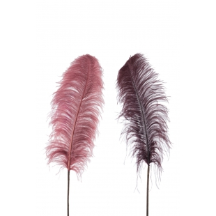 Une plume d'autruche à la couleur rare