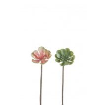 Pépéromia, plante grasse artificelle