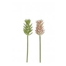 Une aéonium, plante succulente artificielle