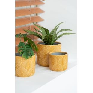 Un cache-pot tropical ocre