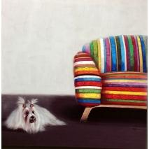 Chouette chienne à couette au pied du canapé